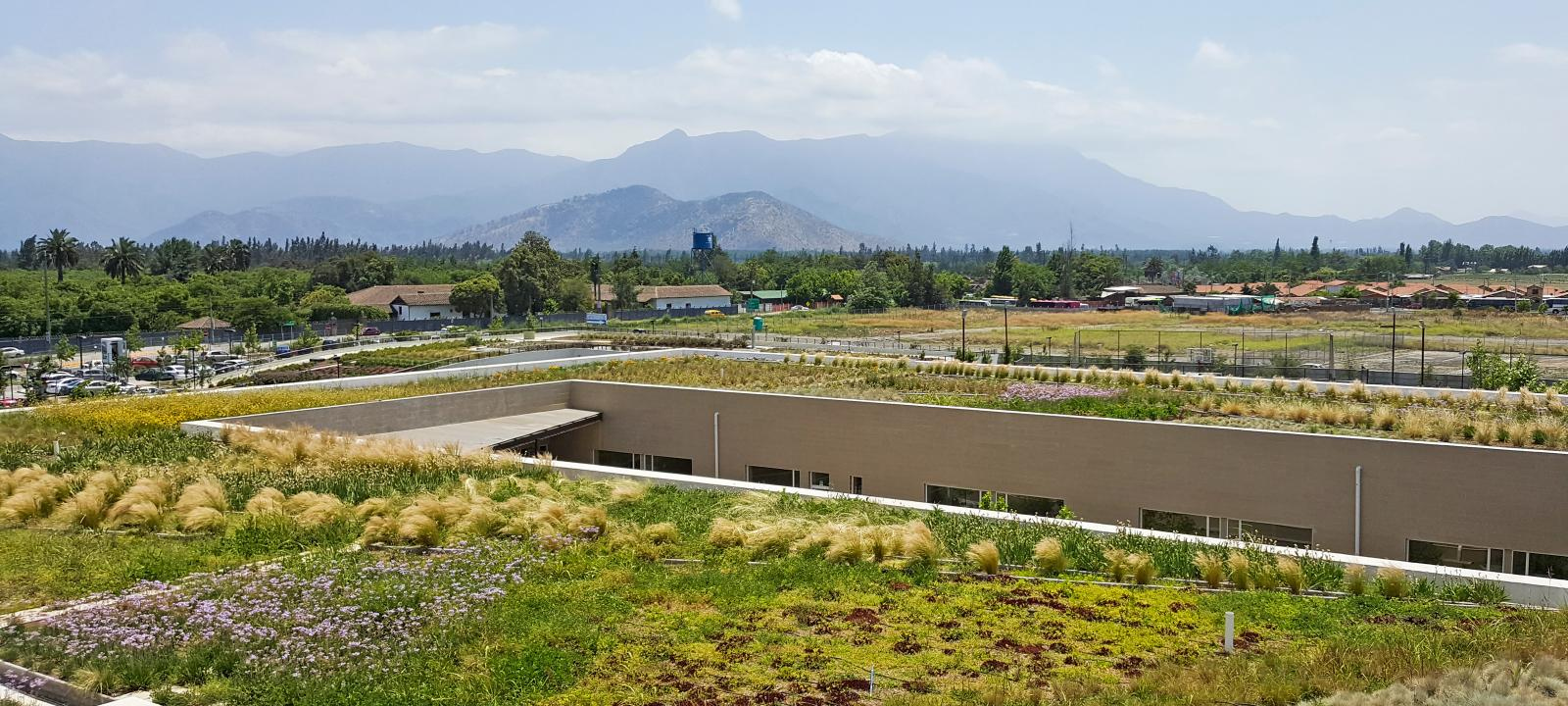 Extensive green roof in Mauritius
